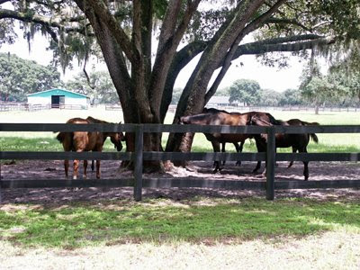 thoroughbred farm