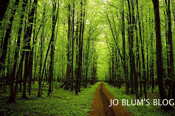 Jo Blum
