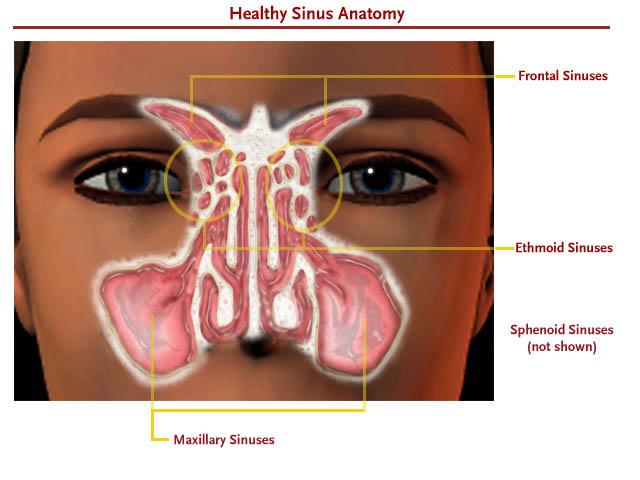 Baihui Sinus Problems And Use Of Noseplugs