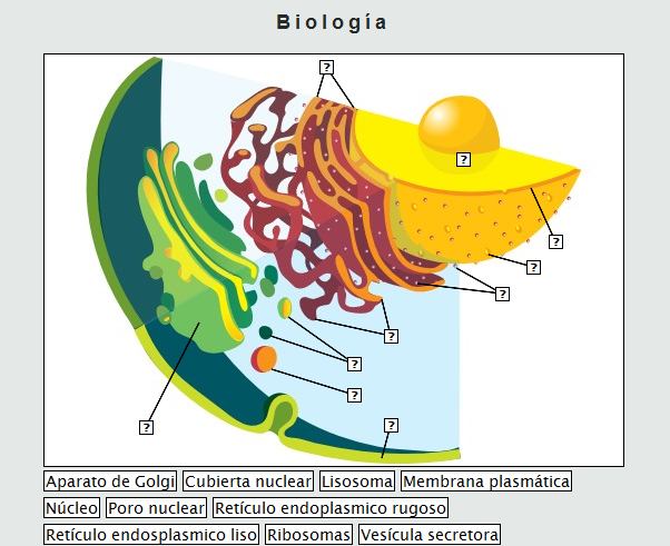 dibujo de celula animal. Célula animal, y.