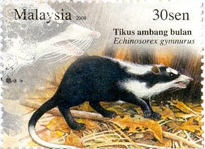 Nocturnal Animal 30sen Moonrat Stamp