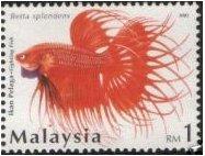 [FightingFish_RM1_2.jpg]