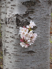 Blooms on the tree trunk