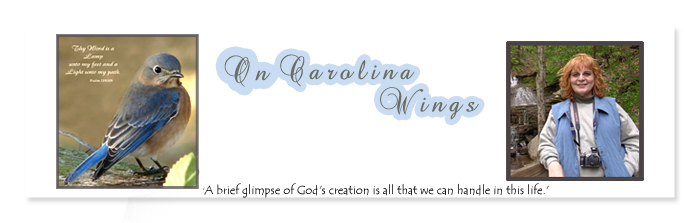 On Carolina Wings