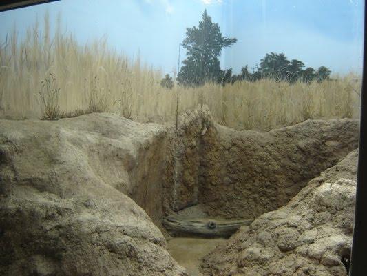 how to make a meerkats habitat