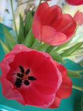 Herlige tulipaner2
