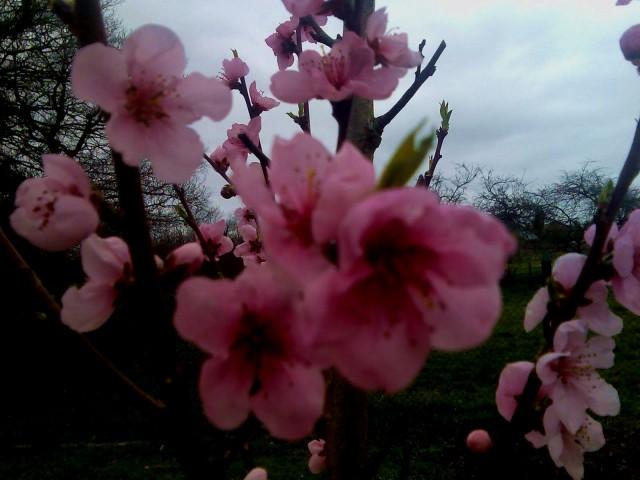 viva la primavera!
