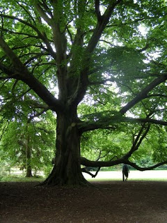 An enormous tree