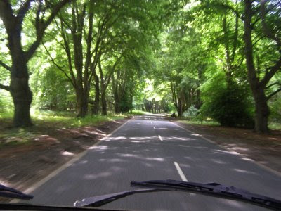A road through woodland - rather pretty