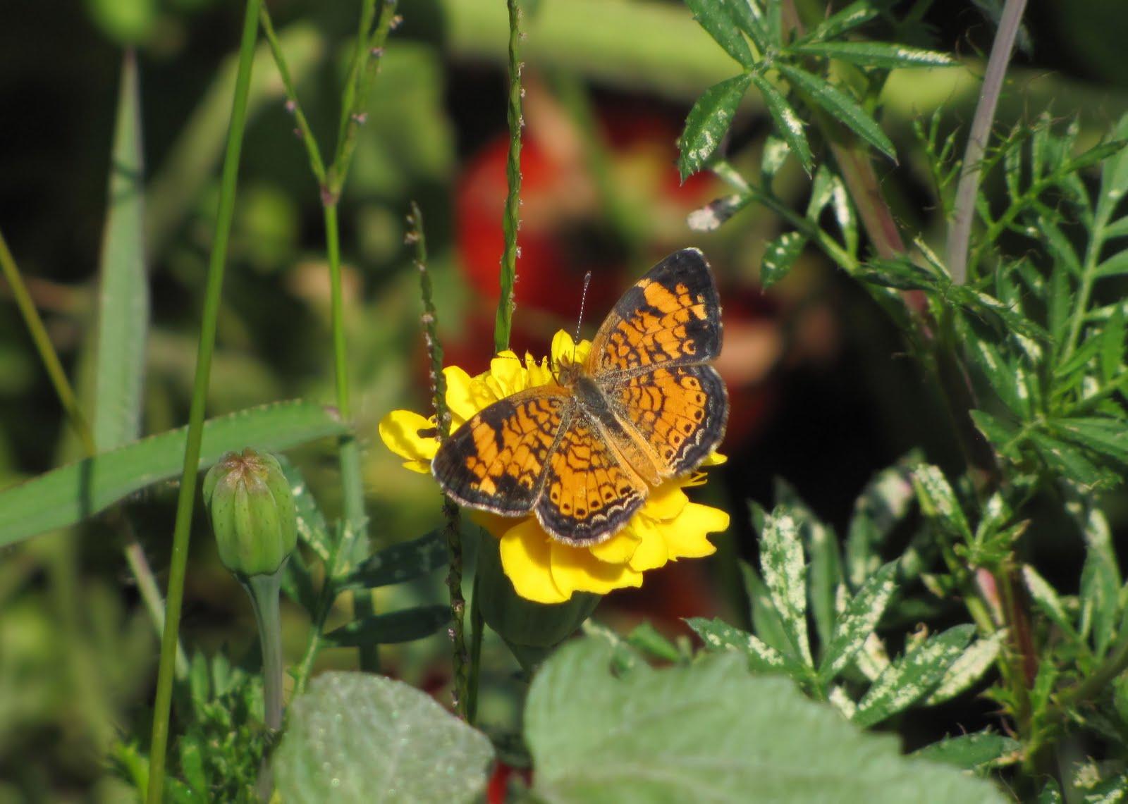 weekends with the birds backyard bugs in delaware