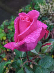 Rosebud