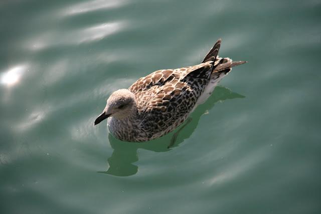 sea_ bird
