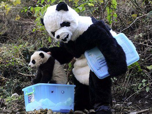 fake-panda-sized.jpg