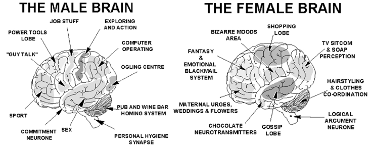 the male and female brain Male and female brains illustrate a number of different characteristics but social stereotypes are equally important in assessing the difference between the sexes.