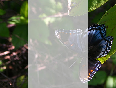 [butterfly2thumb.jpg]