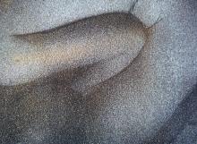 fragmento de Paloma tocada por el oro