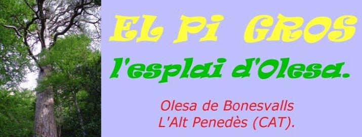 El Pi Gros (ESPLAI OLESA)