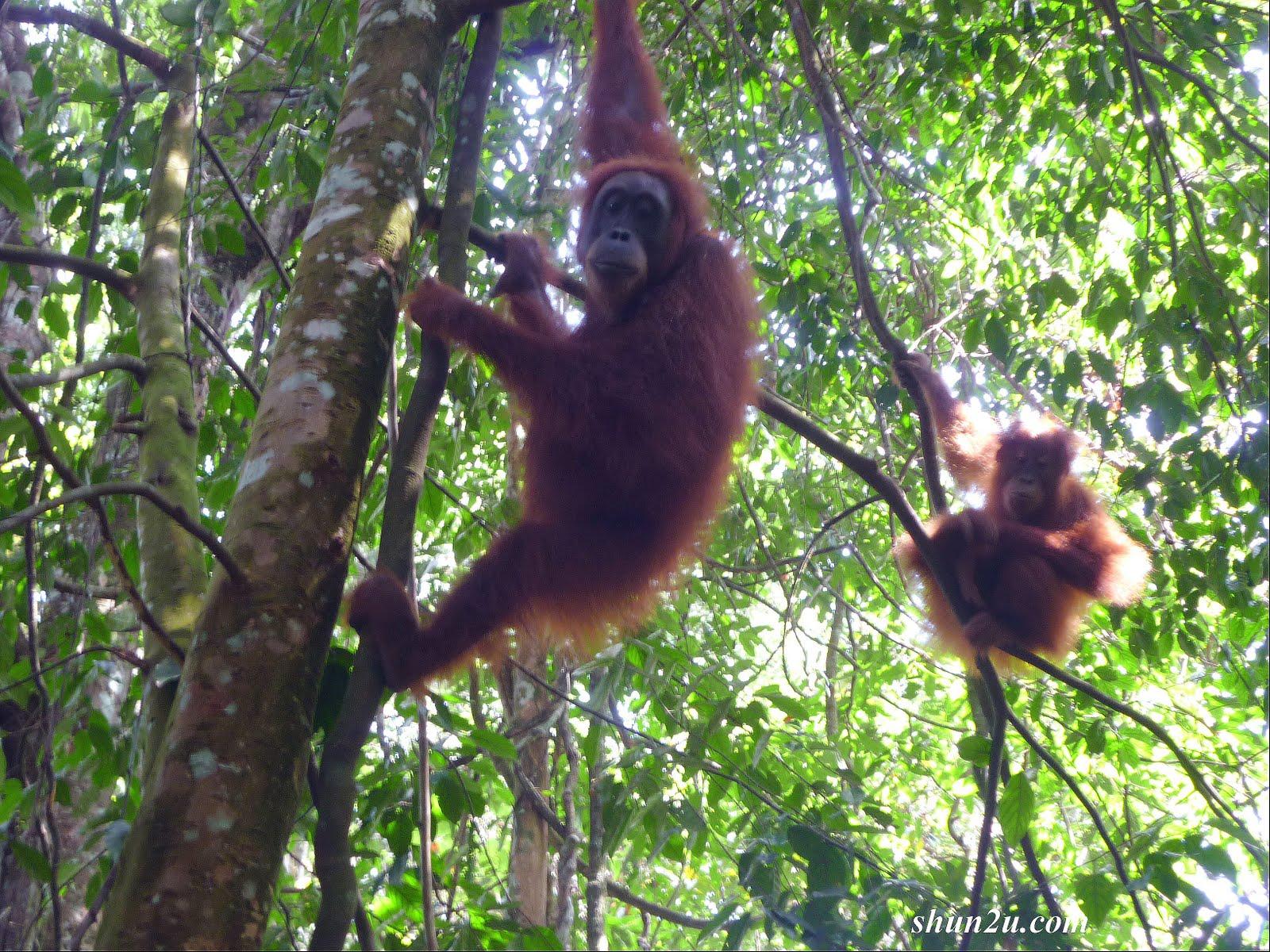Gambar+fauna+di+malaysia