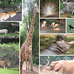 Zoológico em São Luís