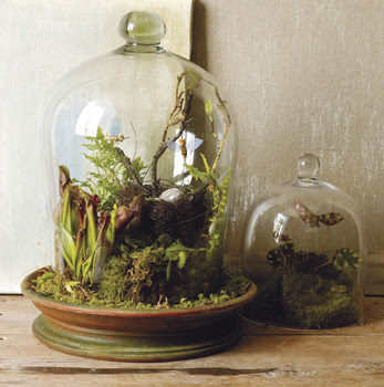 terrarium would look great