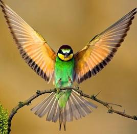 BIRDS FOSSILS REFUTE DARWINISM