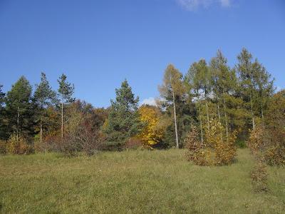 Přírodní rezervace Kamenný vrch 1