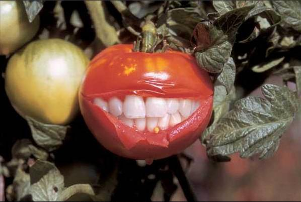 TomatinhO BuuurrO !