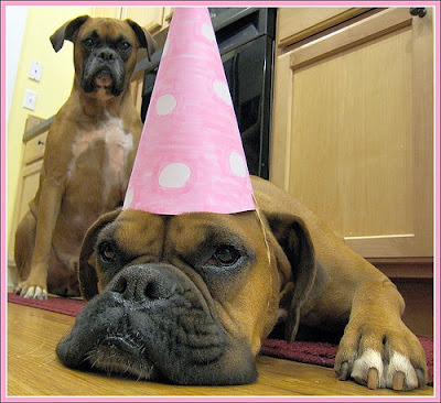 funny-birthday-dogs.jpg