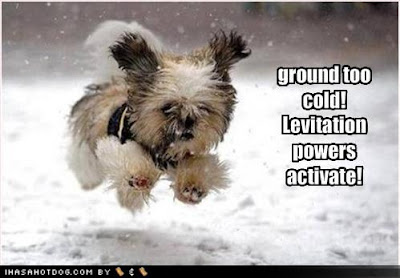 Funny Dog Pictures Ground Cold