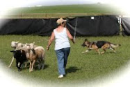 Herding Days at High River pics