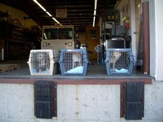 SCA needs crates to keep saving dogs from DAS!