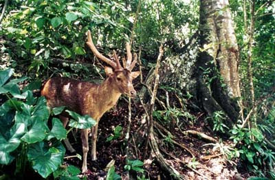 Ujung Kulon National Park Banten