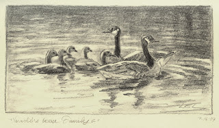 Graphite Drawing of Geese by Lori Levin