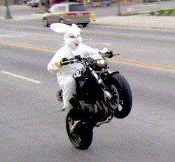 Osterhase auf Motorrad