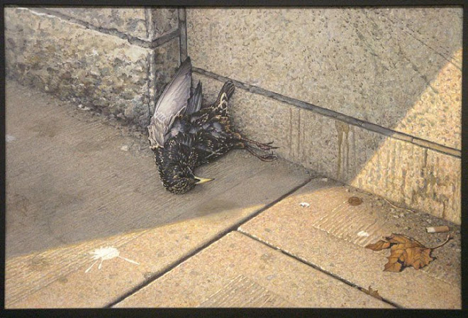 Dead Starling on Locke Street, Hamilton Ontario, Canada.