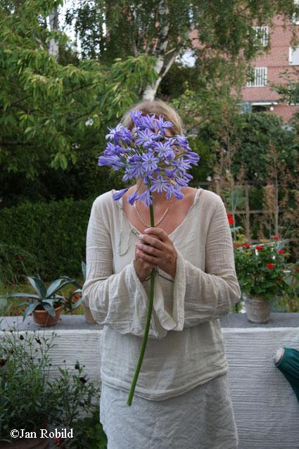 Och ja agapanthus igen ingen sommar har de blommat så frikostigt