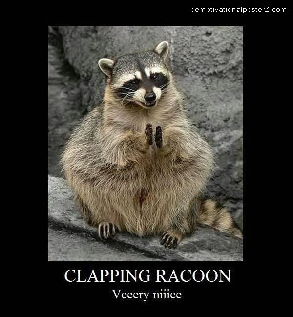 Clapping Racoon very nice