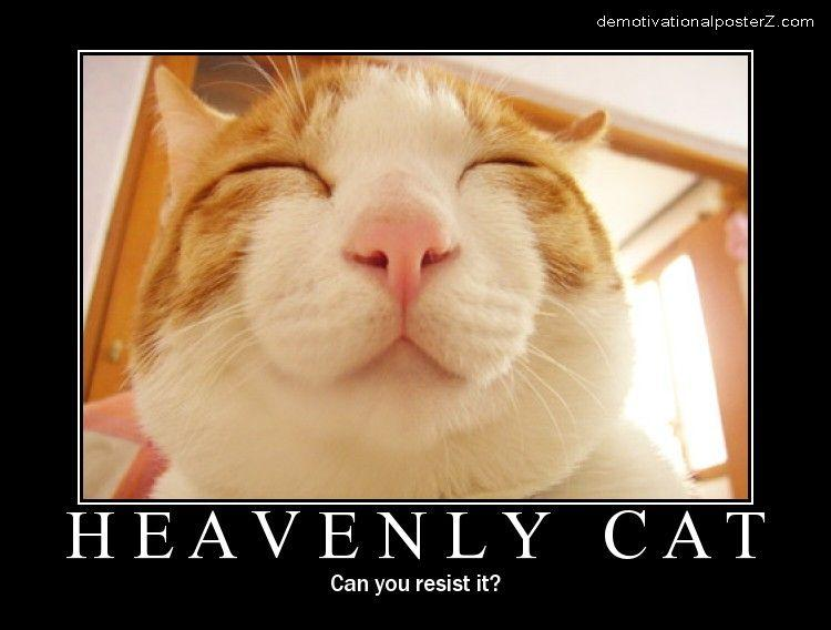 Heavenly Cat