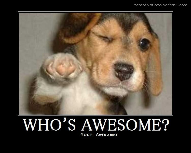 Who's awesome? Dog - puppy motivational