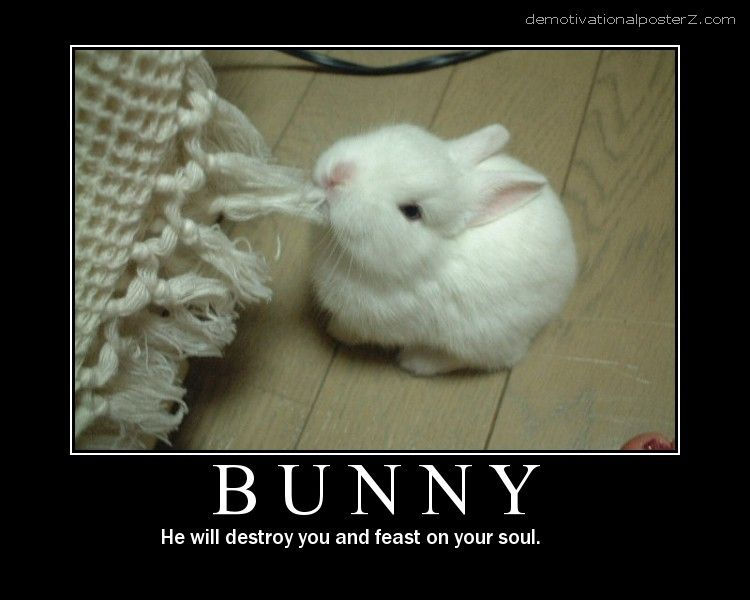 Bunny - he will destroy you and feast on your soul
