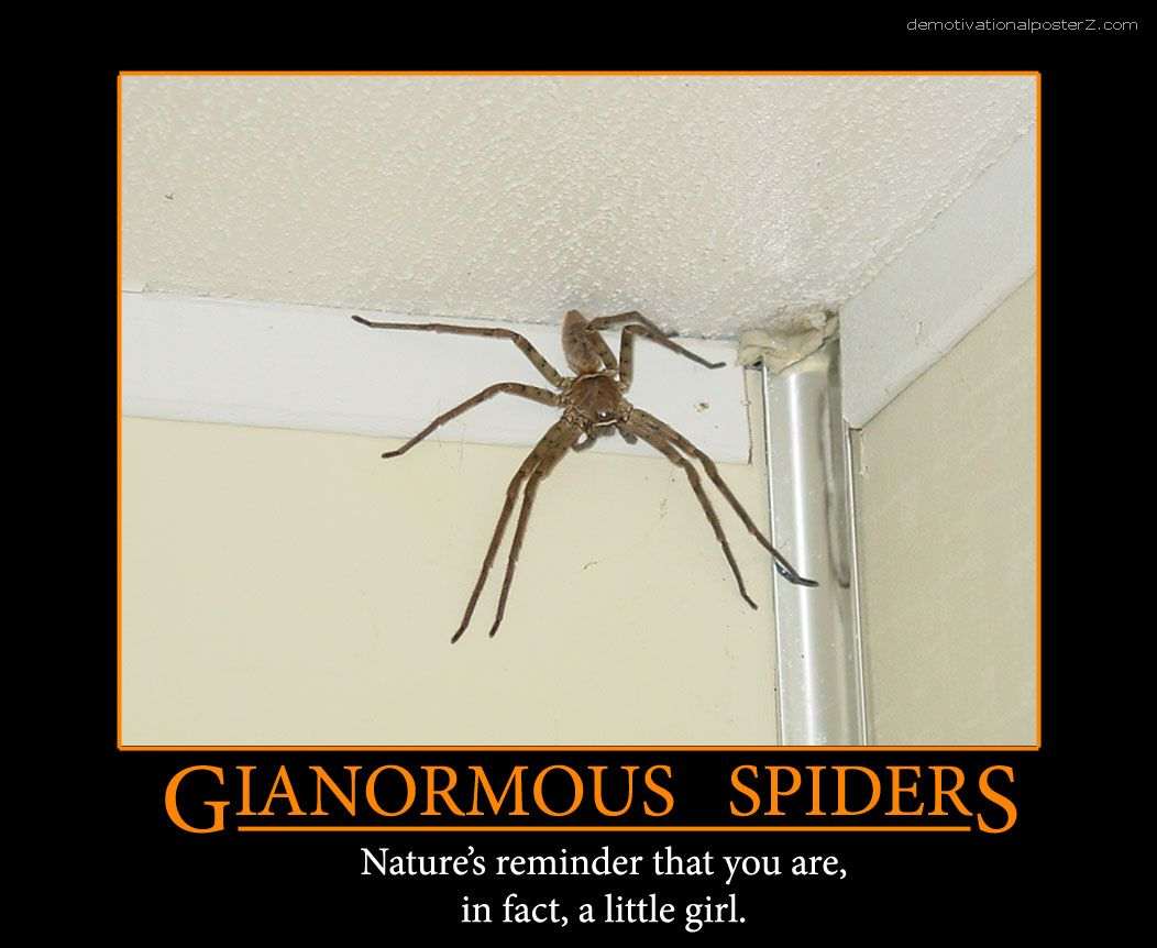 Gianormous spiders poster