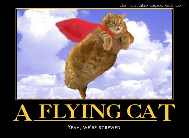 A flying cat - yeah we're screwed