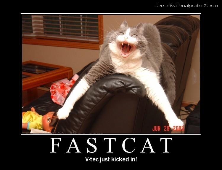 fastcat fast cat v tec motivational poster