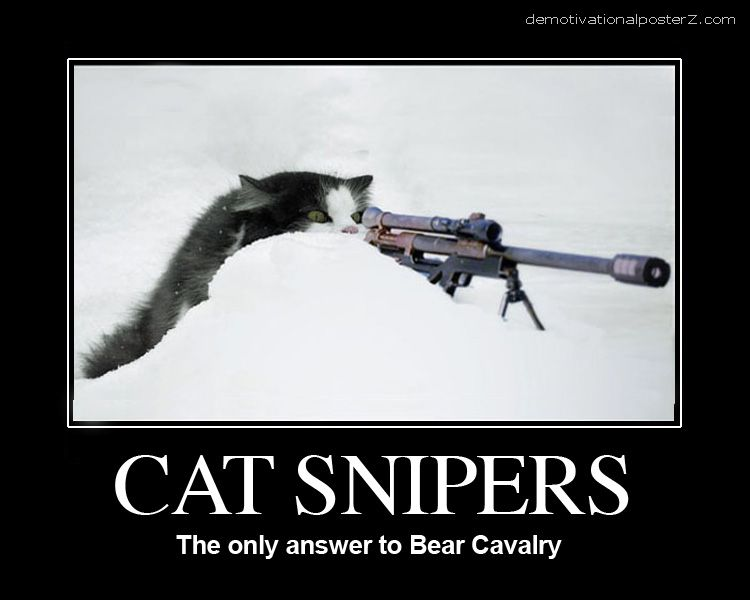 cat sniper in snow