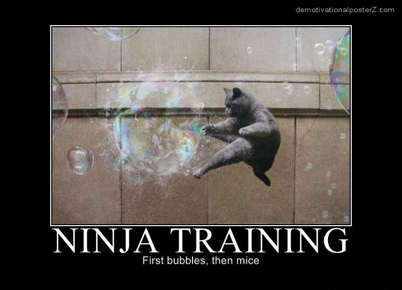 ninja cat training bubbles