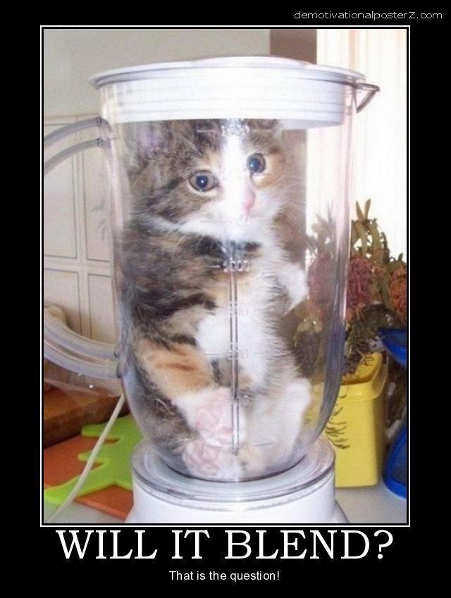 cat in blender
