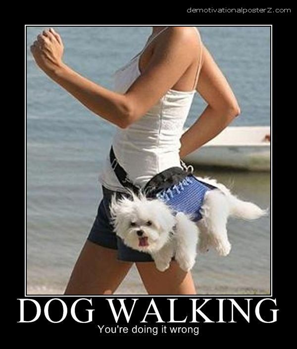 dog walking motivational
