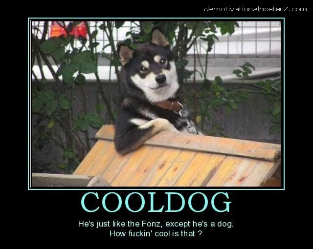 cool dog motivational poster