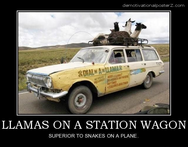 LLAMAS ON A STATION WAGON