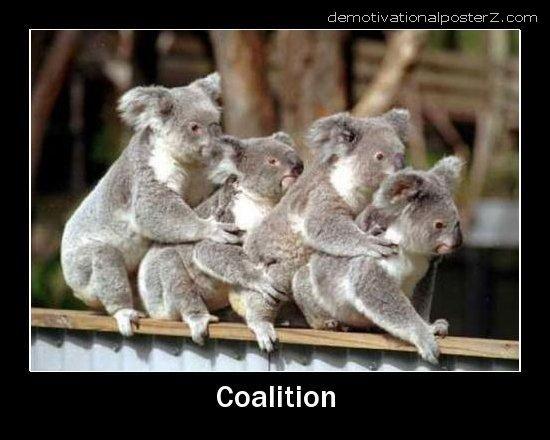 coalition koalas